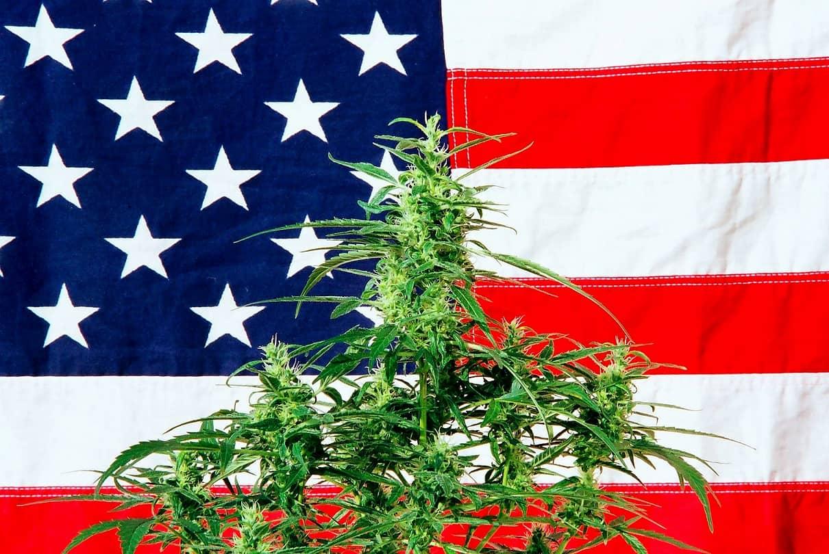 Gidsland Amerika zet opnieuw grote stappen op weg naar opheffing cannabisverbod